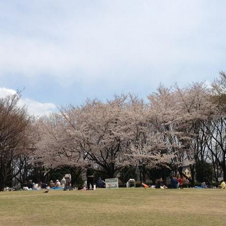 sakura_todunakadai