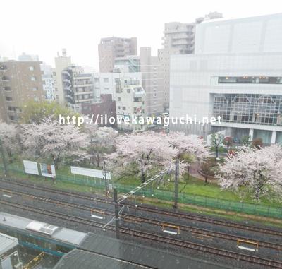 川口駅の桜